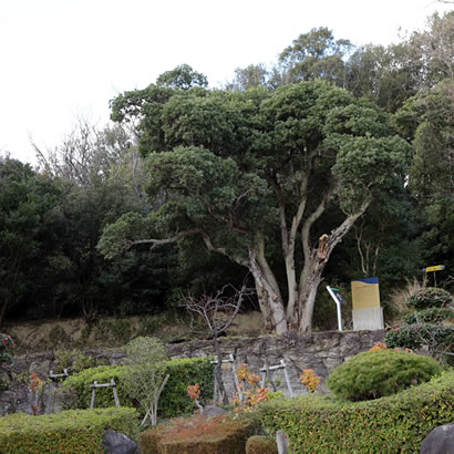 Oka-no-tani No. 1 Tomb: The tomb inconspicuously enshrined atop a low rise