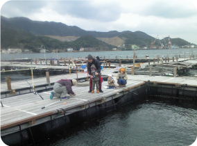 Kaito, Yura Fishing Area on the sea