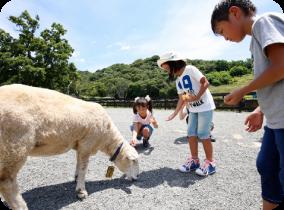 England Hill – Awaji Farm Park