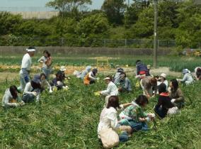 Awaji Island – Hamada Farm