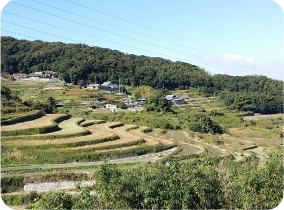 Ikutahata terraced rice fields