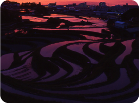 Ishida terraced rice fields